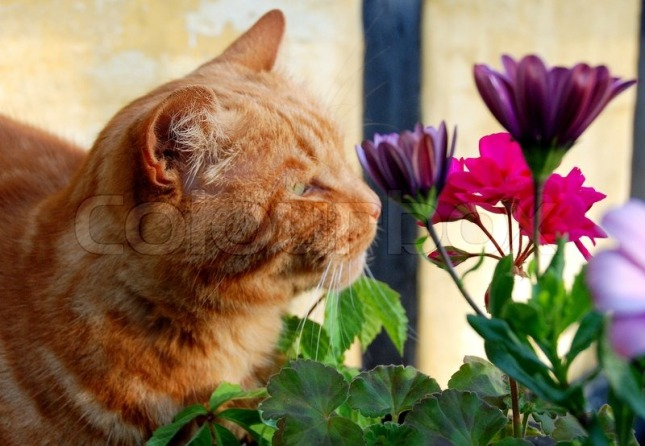 kitty with flowers